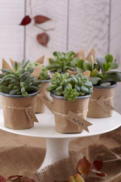 wedding diy succulents