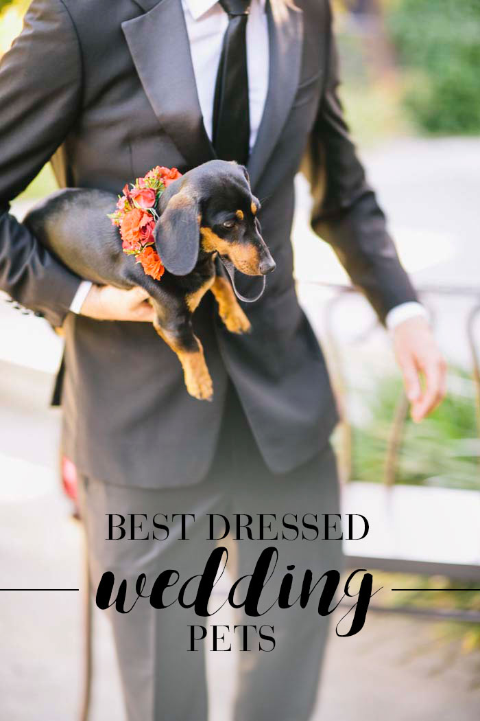 wedding-dog-headerimage